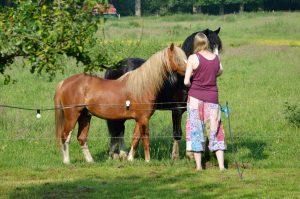 paarden-naast-de-hoeve